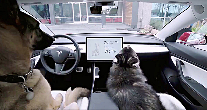"Tesla ""dog mode"" showing a cat and dog inside a car"