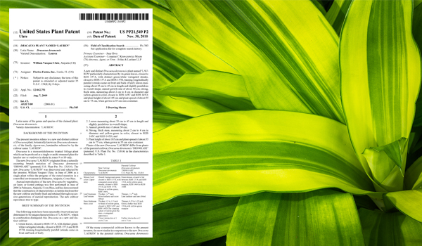 "Born in Costa Rica, William Vásquez Ulate was granted U.S. Plant Patent PP21,549 for a ""Dracaena Plant named 'Lauren.'"""