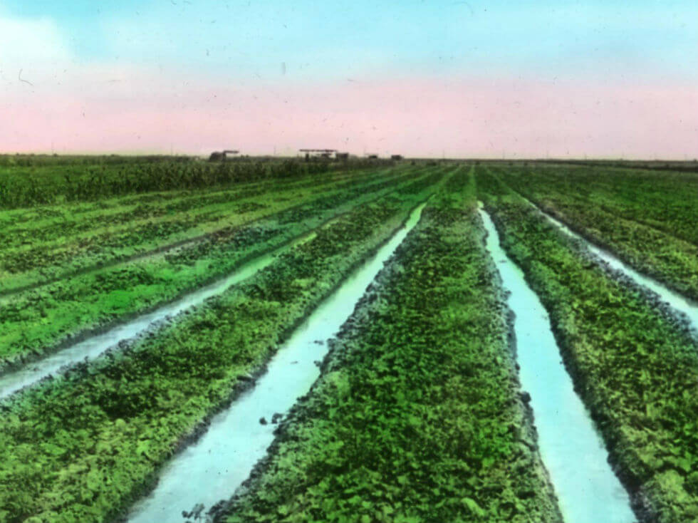 Image: Crops being irrigated in the California Imperial Valley, circa 1919.