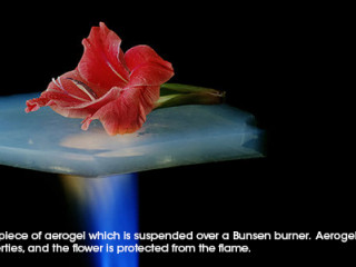 Flower suspended on a piece of aerogel which is suspended over a Bunsen burner