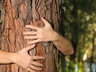 Man hugging a tree